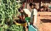 Reveja o projeto social que transforma crianças em 'minifazendeiros'