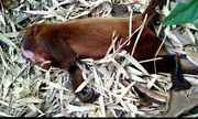 Macacos agonizando são encontrados em Itapina, interior de Colatina, ES