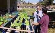 Projeto experimental combina criação de peixes e produção de hortaliças em Uberlândia