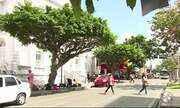 Para celebrar dia da árvore, professor leva estudantes para ação em Caruaru