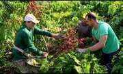 União de famílias mantém a força da cafeicultura no ES
