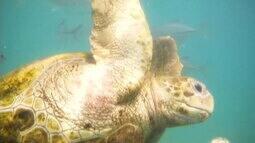 Conheça um aquário para preservação construído dentro do mar de Curaçao