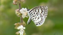 RS possui mais de mil espécies de borboletas