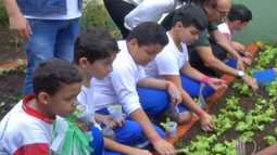 Projeto em Suzano e Mogi das Cruzes faz com que alunos tenham maior contato com hortas