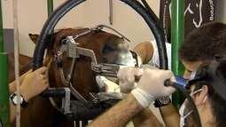 Reprise: Tratamento dentário mantém cavalos mais saudáveis