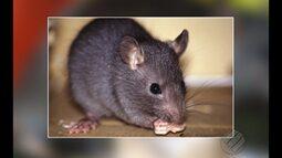 Sesma vai lançar campanha de combate a ratos