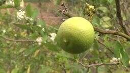 Fruticultores do Vale do Mundaú passam por capacitação
