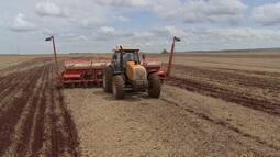 Valorização do dólar impulsiona preço do milho e produtores em MS fecham contratos futuros