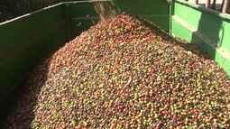 Produção de cereais na região oeste da BA supera números de 2015
