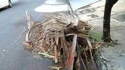 Sem coleta, podas de árvores gera impasse entre prefeitura e moradores em Monte Aprazível