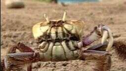Polícia fiscaliza manguezais no período de reprodução de caranguejos no Norte do ES