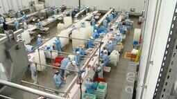 Alto custo na produção prejudica exportação de carne suína