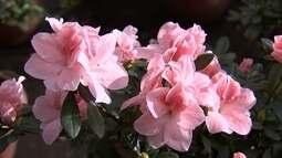 Dia das mães movimenta produção e mercado de flores