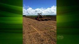 Após prejuízo na safra de verão do feijão, agricultores apostam no cultivo irrigado