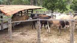 Mirante Rural - Programa de domingo, 22/05/2016, na íntegra