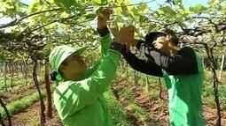 Oferta de emprego na área agrícola sobe e contraria 'crise na cidade'