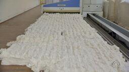 Agricultores fazem cooperativa com beneficiamento do algodão e cultivo de grãos em MS