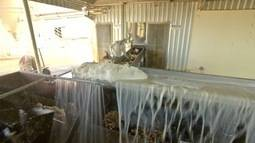 Cooperativas apostam em fécula de mandioca, mercado de ovos e crédito rural em MS