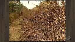Colheita confirma queda na produção de café conilon no Norte do ES