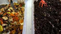 Técnica da compostagem garante adubo natural para o plantio e evita o desperdício