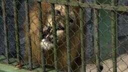 Justiça Federal vistoria o zoológico do Parque da Cidade