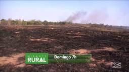 Domingo (24) é dia de Mirante Rural, bem cedinho, na tela da TV Mirante