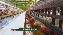 Confira os destaques do 'Amazônia Rural' deste domingo (24)