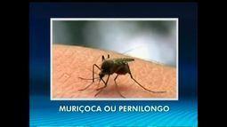 Transmissão do zika vírus pela muriçoca preocupa piauienses