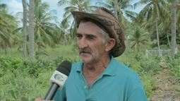 Produtores estão aliando o plantio de palma e coqueiro em Alagoas
