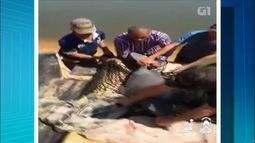 Botos são resgatados após ficarem presos em poços formados em rio