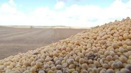 Preço da soja pago ao produtor registra queda nos últimos dois meses em MS