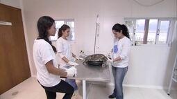 Veterinários se esforçam para salvar animais feridos e doentes no litoral paulista