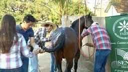 Semana do cavalo é realizada em Prudente
