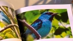 Paixão por pássaros despertada na infância está arte de Tavinho Moura e em livros