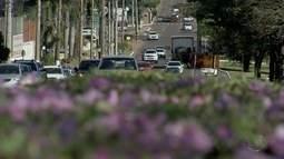 Afonso Pena, a avenida: árvores colocam via entre belezas de Campo Grande