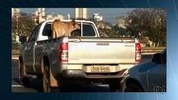Condutores são flagrados desrepeitando as leis de trânsito, em Goiânia