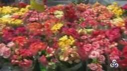 Boa Vista recebe pela segunda vez o festival de 'Flores de Holambra'