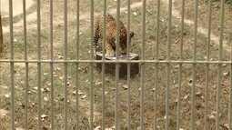 Veja quais são os procedimentos para que animais silvestres capiturados voltem à natureza