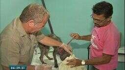 Centro de Zoonoses realiza atendimento gratuito para animais com calazar