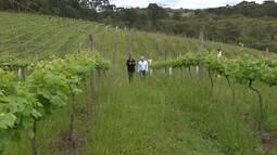 O mundo dos vinhos (parte 2)