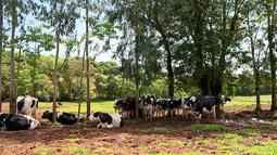 Produtores rurais querem proposta da companhia elétrica após morte de mais de 30 vacas