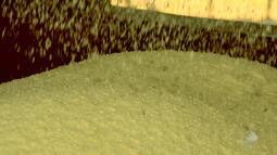Produção de mandioca garante o sustento de pequenos produtores de São Desidério