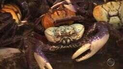 Caranguejo passa por época de troca de casca