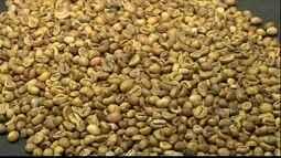 Preço do café conilon ultrapassa o do arábica