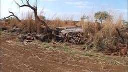 Moradores denunciam desmatamento ilegal na fazenda de ex deputado federal