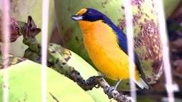 Aves da primavera