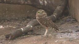 Após resgate e reabilitação, aves e gambás são devolvidos para a natureza em Valinhos