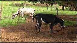 Criadores em Uberaba avaliam crise na pecuária leiteira no estado