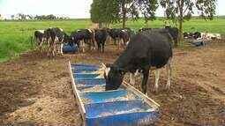 Embrapa analisa oscilação do preço do leite no Estado
