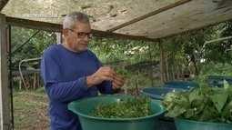 Parte 1: Pai e filho inovam com serviço de delivery de verduras